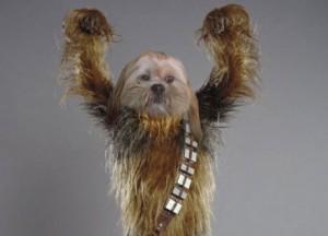 Wookiee1